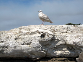 This gull was hanging out right by our beach spot.