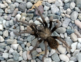 This tarantula photo was a big hit on edhat.